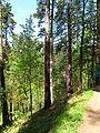 Bosque de Oma (32).JPG
