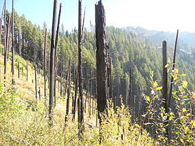 Boulder Creek Wilderness burn.JPG
