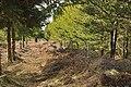 Boundary fence near Easter Cudrish - geograph.org.uk - 1773941.jpg