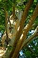 Branches (42561564284).jpg