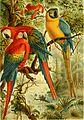 Brehms Tierleben; allgemeine kunde des thierreichs. Mit 1910 abbildungen im text, 11 karten und 180 tafeln in farbendruck und holzschnitt. (1893) (20404502602).jpg