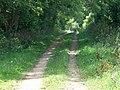 Bridleway, Kingston Lacy - geograph.org.uk - 1471106.jpg