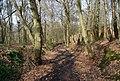 Bridleway through Green Wood (2) - geograph.org.uk - 1252942.jpg