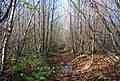 Bridleway through Hurst Wood - geograph.org.uk - 1570706.jpg