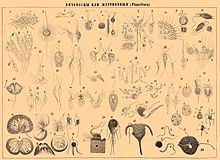 Brockhaus and Efron Encyclopedic Dictionary b7 018-0.jpg