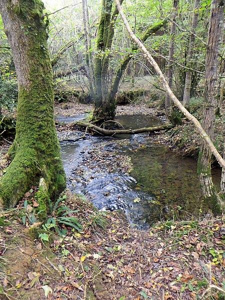 File:Brook running through Berrydown Wood - Oct 2014 - panoramio.jpg