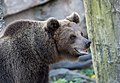 Brown Bear Image.jpg