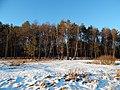 Bryansky District, Bryansk Oblast, Russia - panoramio (45).jpg