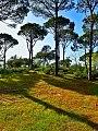 Bteddine-pines-2.jpg