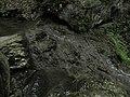 Bubovice-Srbsko - panoramio (91).jpg