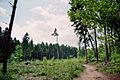 Buchholzer Forst Kahlschlag.jpg