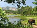 Buffalo and French Lake.jpg
