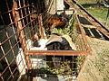 BulacanAgriculturalStateCollegejf6062 06.JPG