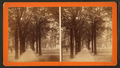 Bull Street, from Madison Square, Savannah, Ga, from Robert N. Dennis collection of stereoscopic views.png