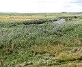 Burgh Castle Marshes on a sunny September day - geograph.org.uk - 1484319.jpg