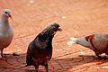Burung pose (4484159357).jpg