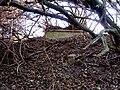 Bydgoszcz - opuszczony cmentarz ewangelicki przy ul Smętnej 10 i Nastrojowej14 - panoramio (4).jpg