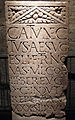 CCAA AE 2003, 01218 Catunectus SM.jpg