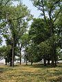 C M Gooch Park Memphis TN 011.jpg