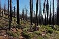 California, Yosemite National Park, burnt down zone.jpg