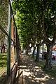 Calle árbolada.JPG
