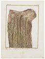 Camelus dromedarius - ingewanden - 1700-1880 - Print - Iconographia Zoologica - Special Collections University of Amsterdam - UBA01 IZ21600085.tif