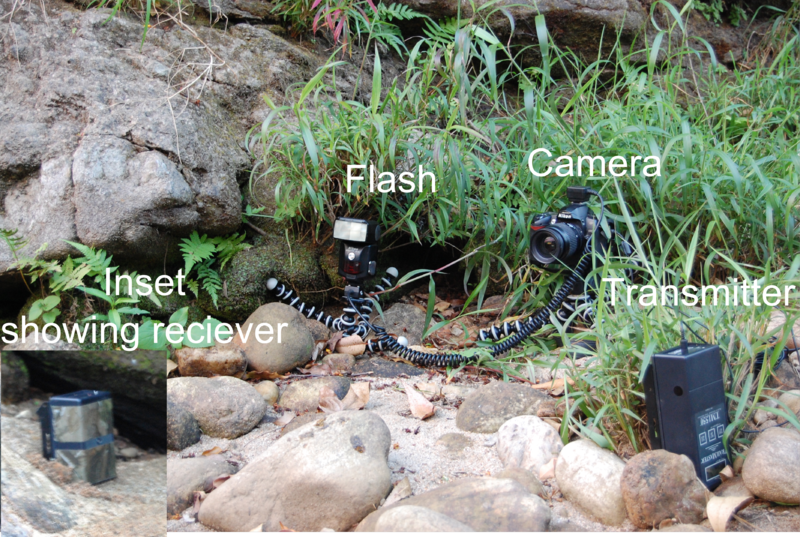 File:Camera trap.png