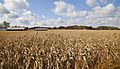 Campo de maiz, Walker, Indiana, Estados Unidos, 2012-10-20, DD 04.jpg