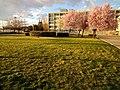 Campus Río Ebro de Zaragoza - atardecer de marzo.jpg