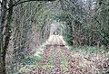 Canal towpath - geograph.org.uk - 1169368.jpg