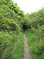 Candy's Pit Trail (1) - geograph.org.uk - 1286239.jpg