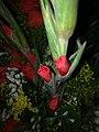 Canh hoa lay on do.jpg
