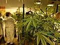 Cannabis Tourism.jpg