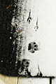 Cat and bird tracks in Seattle snow 2008.jpg