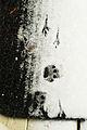 Cat and bird tracks in Seattle snow 2008.jpg