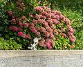 Cat at UBC.jpg
