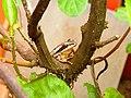Cautious Tree Frog.jpg