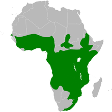 Cecropis abyssinica distribution map.png