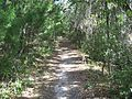 Cedar Key FL Shell Mound Park trail03.jpg