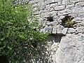 Château de Puilaurens 51.JPG