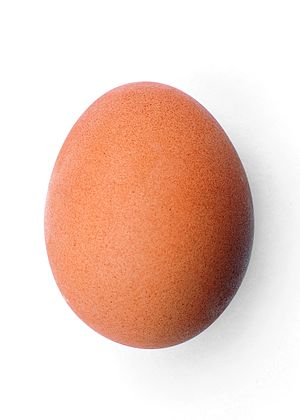 English: A chicken egg (Gallus gallus domesticus)