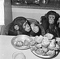 Chimpansees Hilda en Tilly uit Artis, Bestanddeelnr 917-2806.jpg