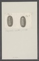 Chiton spec. - - Print - Iconographia Zoologica - Special Collections University of Amsterdam - UBAINV0274 081 06 0033.tif
