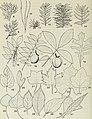 Cicadelles des arbres ornementaux et fruitiers du Canada (1985) (20424159979).jpg