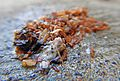 Cigarette butt on wet sidewalk after heavy rain Mégot a 02.jpg