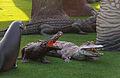 CinenaCityCrocodiles-pic0018.jpg