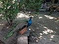 City garden Niš.IMG 3711.jpg