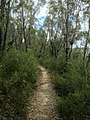 Cliff Top Track - panoramio (10).jpg