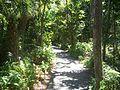 Coco Grove FL Vizcaya path01.jpg