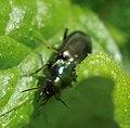Coleoptera (3459928264).jpg